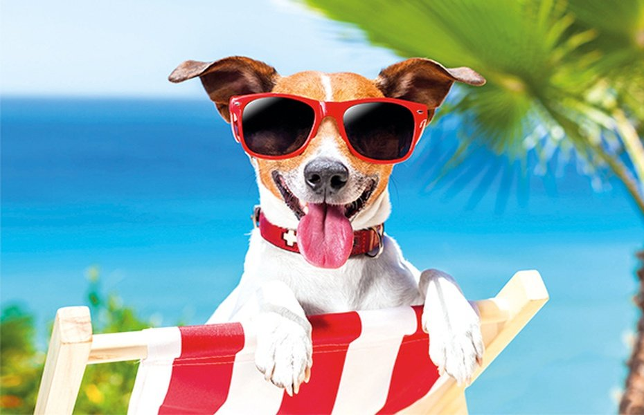 Vacaciones con tu mascota ¡Somos Pet Friendly! Parque Vacacional Magic Robin Hood Alfaz del Pi